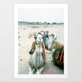 Camel 01 Art Print