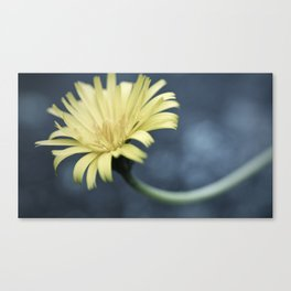 Yellow Daisy Canvas Print