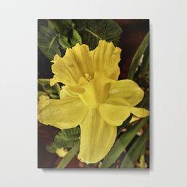 Daffodil at Barthel's Farm Market Metal Print