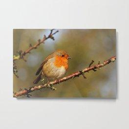 European Robin in Donegal 107 Metal Print