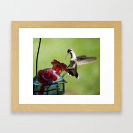 Ruby Throat Humming Bird 3 Framed Art Print