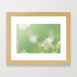 Bee on Flower Framed Art Print