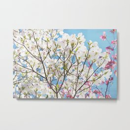 White Dogwood Floral Metal Print