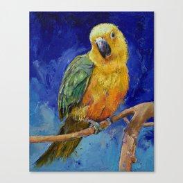 Jenday Conure Canvas Print