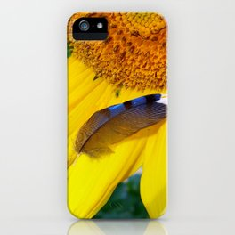 A Bluejay Was Near iPhone Case