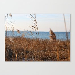 MD'Youville Canvas Print