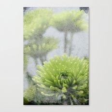 PomPom Canvas Print