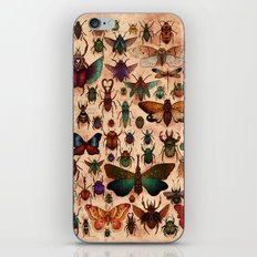 Love Bugs iPhone & iPod Skin