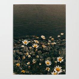 Daisy On The Salt Marsh Trail Poster