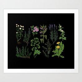 Medicinal plant Art Print