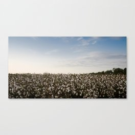 Cotton Field 2 Canvas Print