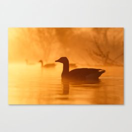 Early Morning Mood Canvas Print