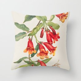 Crossvine Vintage Botanical Print, Mary Vaux Walcott Throw Pillow