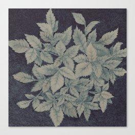Roses plant Canvas Print