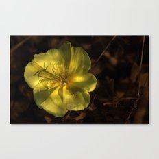 Little Yellow Wonder Canvas Print
