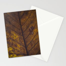 Close up for a dry leaf Stationery Cards