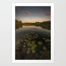 Water Lilly Landscape Art Print