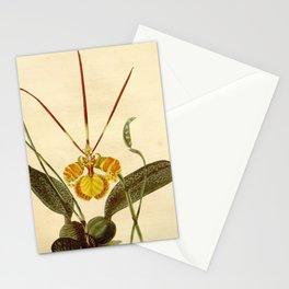 Flower oncidium papilio26 Stationery Cards