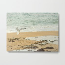 Gull Flight Photography  art Metal Print