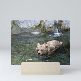 Awe Inspiring Adult Grizzly Bear Swimming In Water Ultra HD Mini Art Print