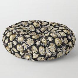Ernst Haeckel Echinidea Sea Urchin Floor Pillow