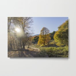 Autumn Oaks Metal Print