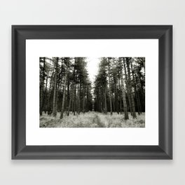 Pine tree path... Framed Art Print
