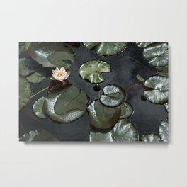Water Lily Metal Print