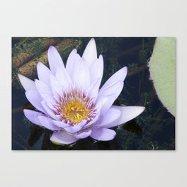 Blue Lotus Flower Canvas Print