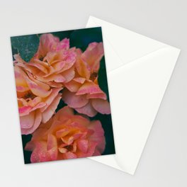 Point defiance rose garden on a rainy day Stationery Cards