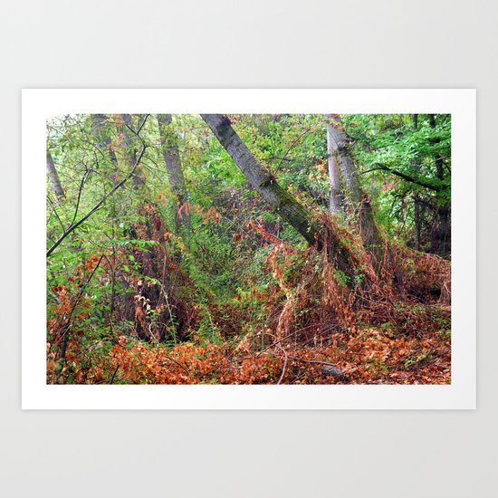 """""""The deep, rainy and mysterious forest"""" Art Print"""