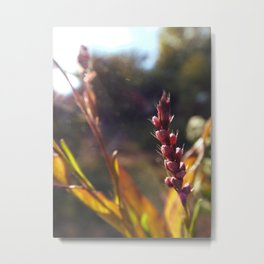 Dainty Pinks in the Sunlight Metal Print