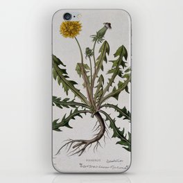 Botanical Dandelion iPhone Skin