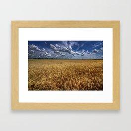 Amber Waves Of Grain Framed Art Print