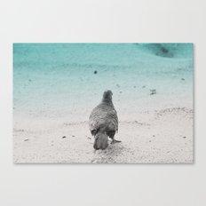 Bird on the Beach in Kauai Canvas Print