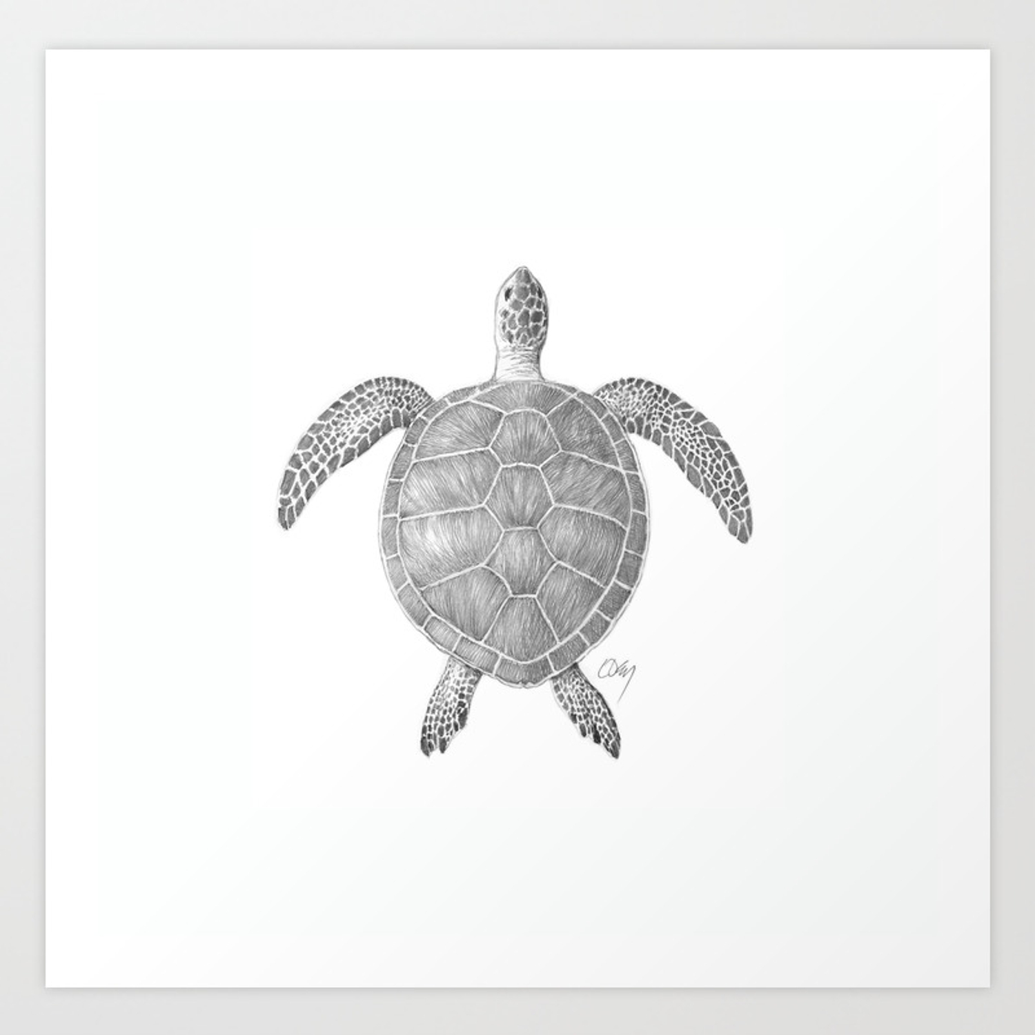 Sea turtle pencil drawing art print