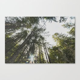 Jackson State Forest Canvas Print