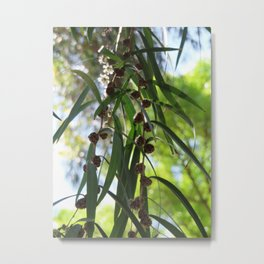 Australian Natives Print | Native tree's | Barwon Heads Metal Print