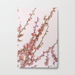 pink skies and apricots Metal Print