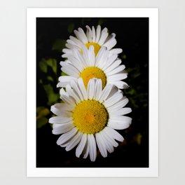 Daisy Cascade Art Print