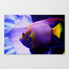 Not for fishing Canvas Print
