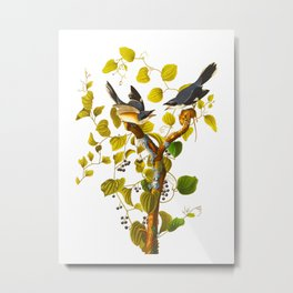 Loggerhead Shrike Bird Metal Print