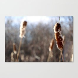Focus on the present Canvas Print