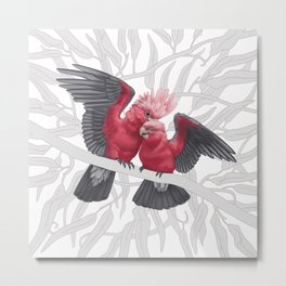 Galah Cockatoos on Eucalyptus tree. Metal Print