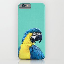 Macaw Parrot in Blue iPhone Case