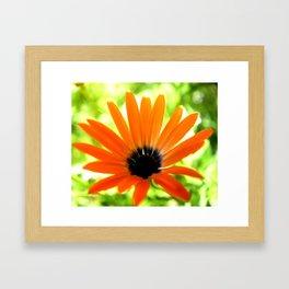 Solar orange daisy flower Framed Art Print