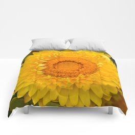 Everlasting Comforters