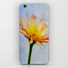 Daisy Texture iPhone & iPod Skin
