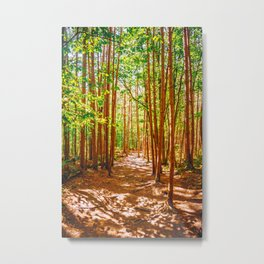 Forest in Minnesota-Nature Photography Metal Print