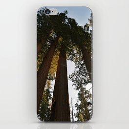 Sequoia iPhone Skin